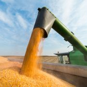 Commercialisation des grains